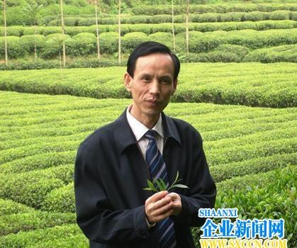 韩星海茶散文《寻找紫阳老茶树》荣获二等奖